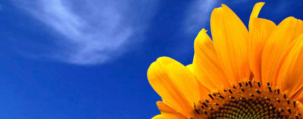 Foto de um girassol e do céu